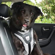 Safety Dog Harness - Steel Gray