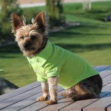Solid Dog Polos - Green Flash