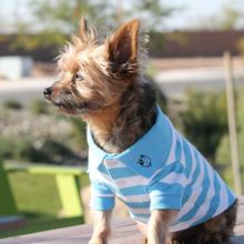 Striped Dog Polos - Blue Niagara and White