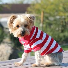 Striped Dog Polos - Flame Scarlet Red and White