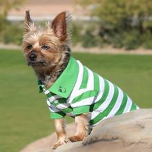 Striped Dog Polo - Greenery and White