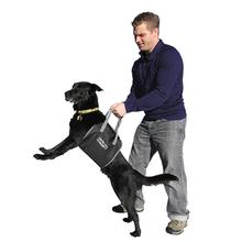 Up and Out Lift Dog Harness - Black