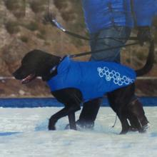 Venture Outerwear Dog Coat - Electric Blue