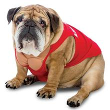 Zelda Life Guard Halloween Dog Costume